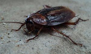 Czy warto jest zainwestować w środek na karaluchy a także pozostałe insekty?