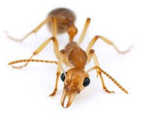 Jak najlepiej poradzić sobie z mrówkami w naszym ogrodzie a także czy można robić to na samodzielnie