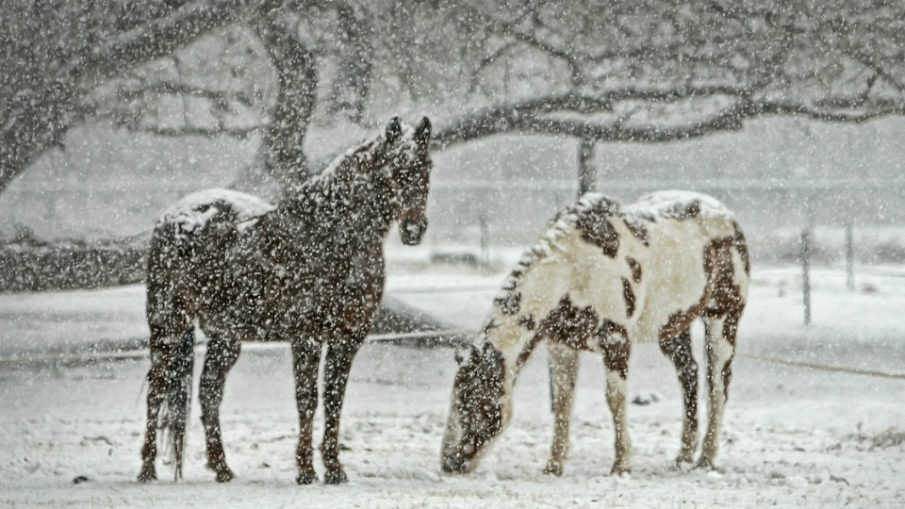 zimowy kurs jeździecki w ośrodku qń